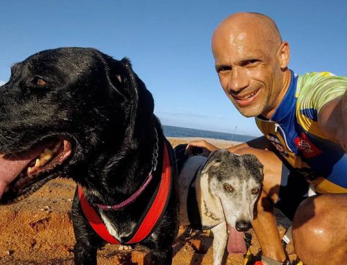 O esporte que une duas paixões: corrida e cachorros